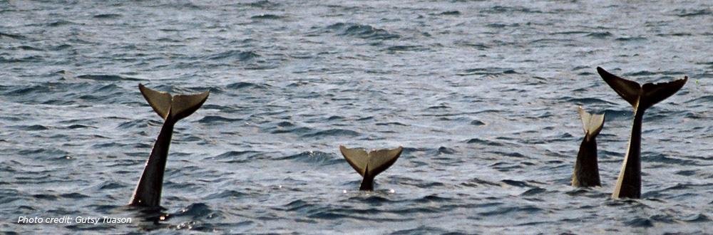 dolphin-tails-header.jpg
