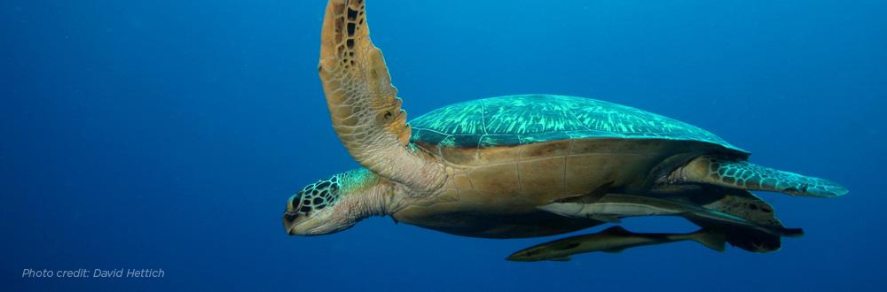 turtle-header.jpg
