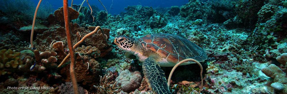 turtle-header2.jpg